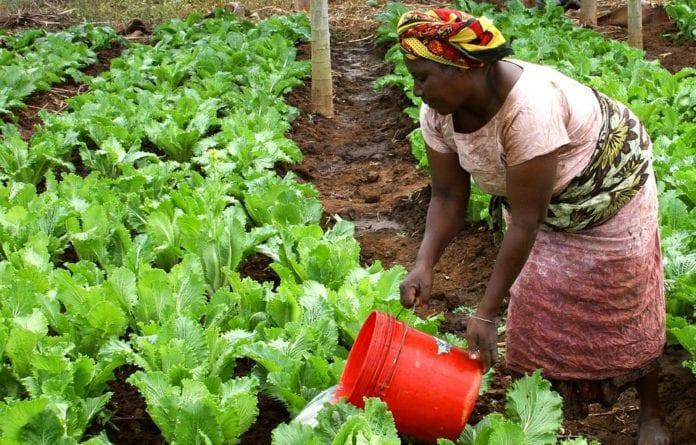 sektor rolniczy w Afryce, rolnictwo, rolnictwo w Afryce, Euractiv, Josefa Sacko