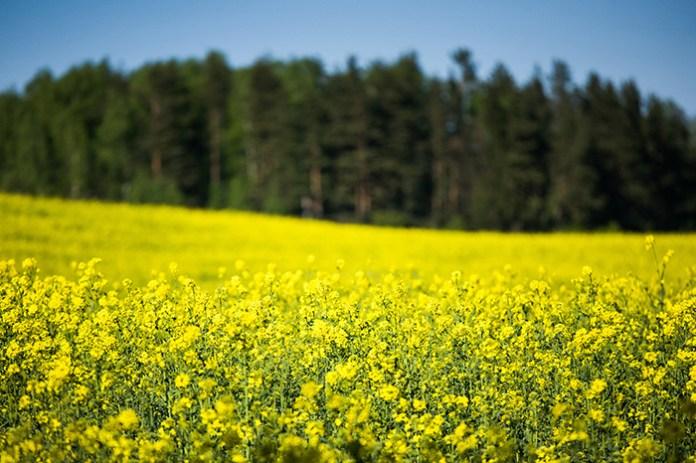 Prawo forsowane przez Chorwacki rząd zagrozi ekologicznej produkcji rolnej