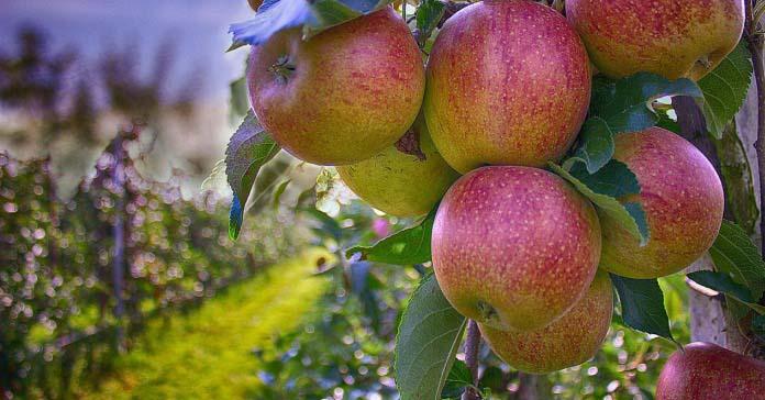 rolnik, sadownik, unia owocowa, grupy producenckie, grupy producentów,