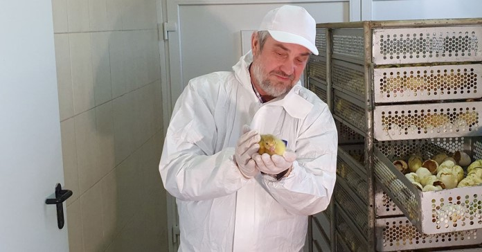 gęsi, minister rolnictwa, hodowla gęsi, Jan Krzysztof Ardanowski, sprzedaż bezpośrednia