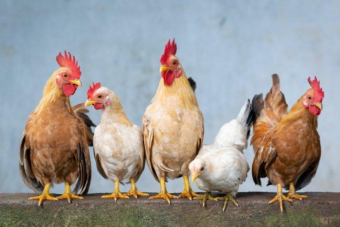70 proc. Polaków kupuje jaja z wolnego wybiegu