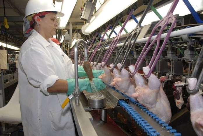 kontyngenty dla Ukrainy, mięso drobiowe, drób, wołowina, wieprzowina, KIPDiP