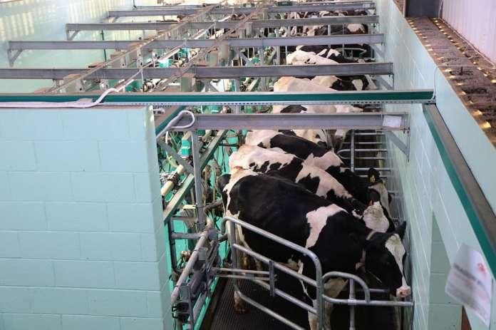 Takiej ceny mleka nie było od lat
