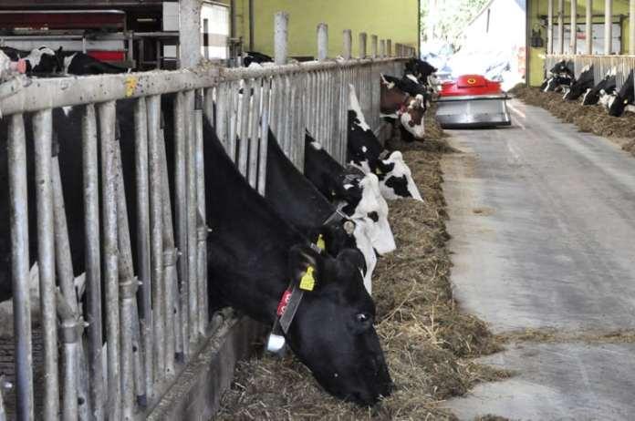 Ochrona zdrowia zwierząt, rząd, zoonozy, choroby odzwierzęce Instytut Weterynaryjny,