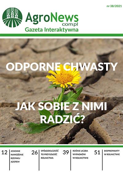 gazeta38_400x564