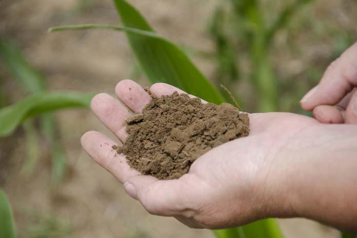 nawozy fosforowe, mikroorganizmy glebowe, fosfor, uprawy, gleba