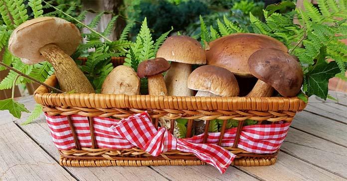 grzyby, SGGW, Wartość odżywcza grzybów