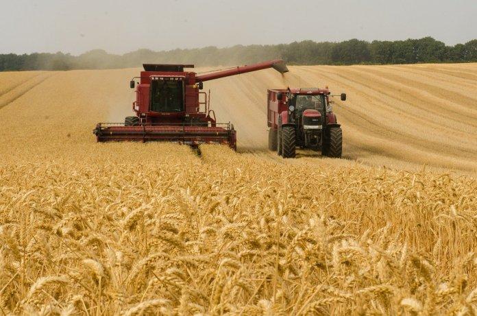 Rekordowe prognozy zbiorów zbóż na Ukrainie