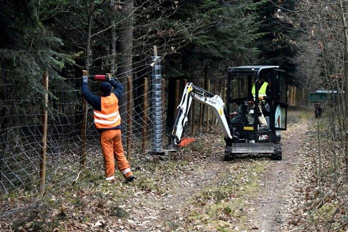 Gotowe ogrodzenia lasów w związku z rozprzestrzenianiem się ASF
