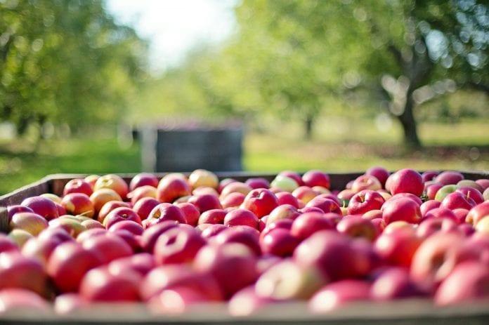 """Eksport jabłek do Indii tylko z zaświadczeniem """"Bez GMO"""""""