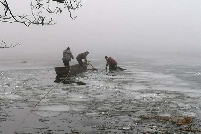 Myśliwi wyciągają kolejne martwe jelenie z jeziora w Ińsku