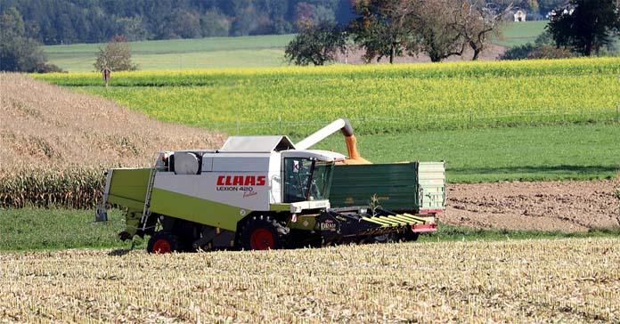 kukurydza, import kukurydzy z Ukrainy, ministerstwo rolnictwa, ceny skupu kukurydzy