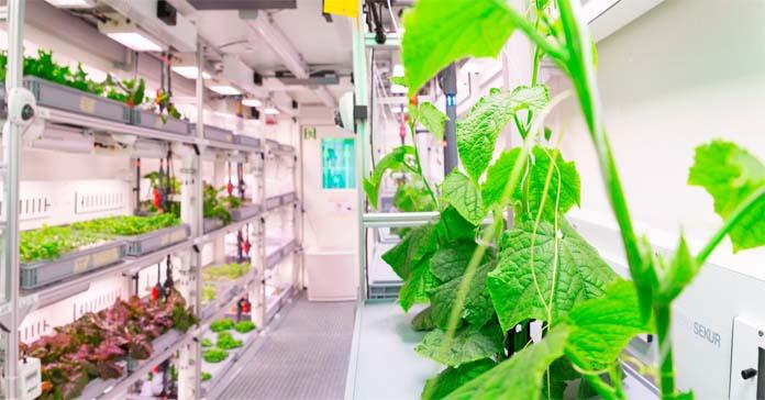 rolnictwo, warzywa, hodowla, uprawa, Niemiecka Agrencja Kosmiczna, EDEN ISS