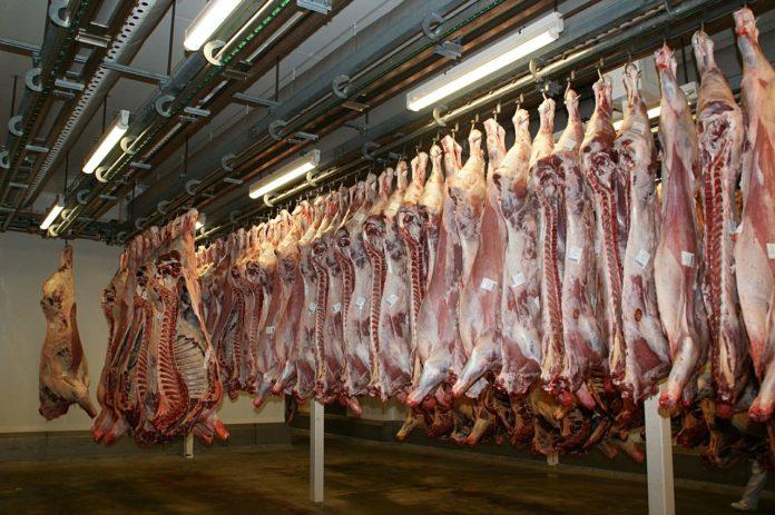 ceny żywca wołowego, nielegalny ubój, nielegalny ubój chorych krów, wołowina, ceny wołowiny