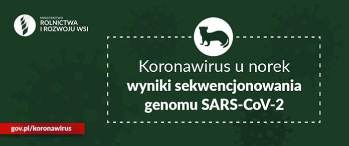 Wirus u norek może przenikać na człowieka i odwrotnie !!!