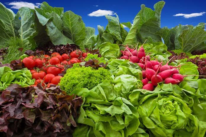 nowalijki, SGGW, rolnik, warzywa