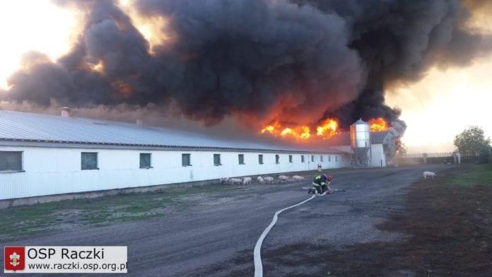 pożar chlewni, świnie, pomoc dla rolników, wypadki na wsi, OSP Raczki, PSP Suwałki