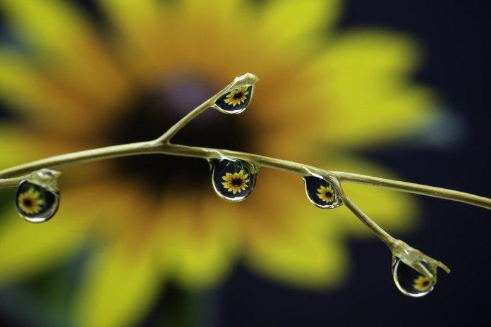 PIORIN przypomina o warunkach bezpiecznego stosowania środków ochrony roślin