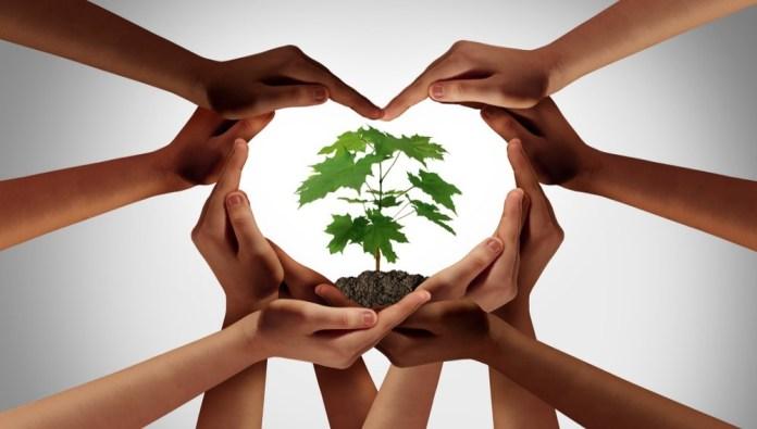 KE opublikowała plan działania na rzecz rozwoju produkcji ekologicznej