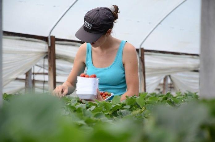 zakwaterowanie pomocnika rolnika, rolnik, KRUS, pomocnik rolnika, podatki, KRIR