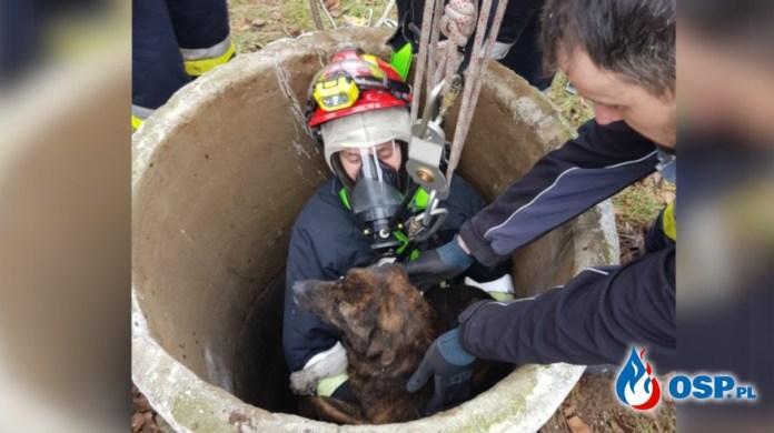 Strażacy ratowali psa, który wpadł do głębokiej studni zwierzę było wyziębione