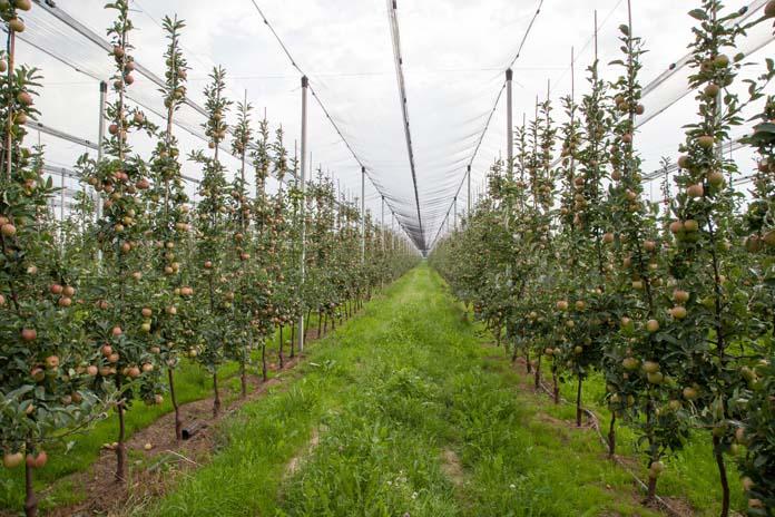 rolnik, rolnictwo, Innvigo, parch jabłoni, mszyce, fungicydy, jabłoń