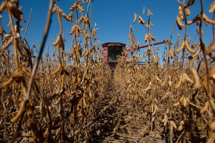 rolnik, rolnictwo, zysk rolnika, szacowanie szkód w rolnictwie, IUNG, susza