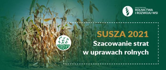Szacowanie strat w uprawach rolnych spowodowanych wystąpieniem suszy w 2021 r.