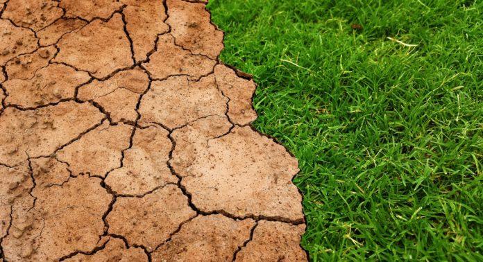 rolnik, rolnictwo, susza, prof. dr hab. Stanisław Czaja, zmiany klimatu, ocieplenie klimatu, zbiory zbóż