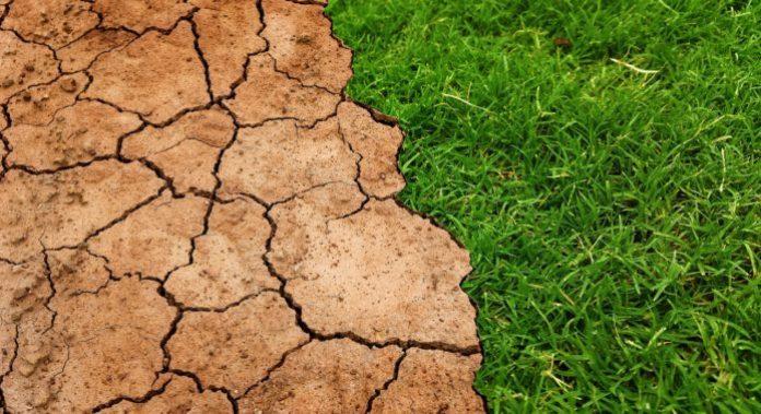 susza, IUNG, szacowanie strat suszowych
