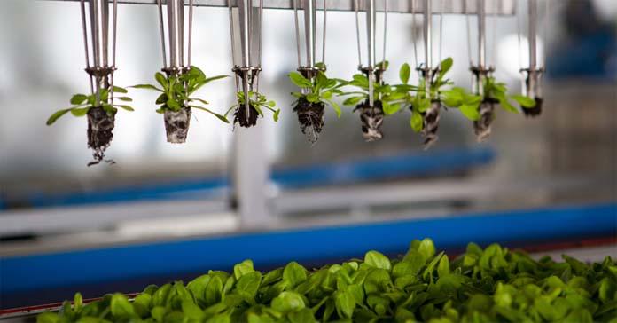 start-upy w branży rolno-spożywczej, foodtech, nowe rozwiązania na rynku spożywczym, źródła białka, druk 3D żywnościub