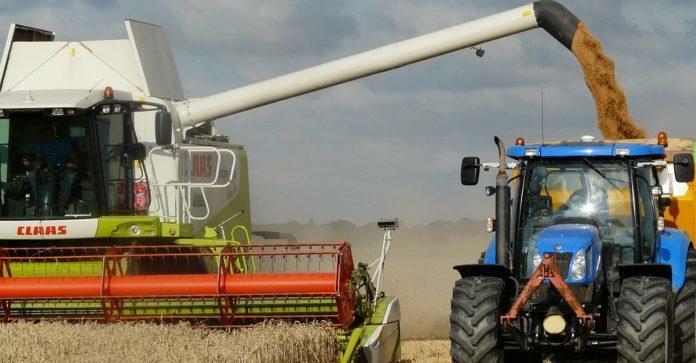 AgroNawigator, pszenica, produkcja pszenicy