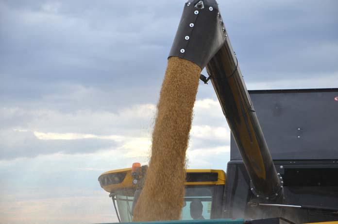 Ceny skupu zbóż wroku bieżących (z pierwszych dni lipca) są znacznie wyższe niż wtym samym okresie wroku ubiegłym.