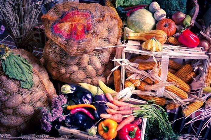 GUS podał wstępny szacunek głównych ziemiopłodów rolnych
