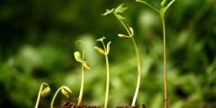 Le rythme d'absorption des éléments nutritifs par la plante