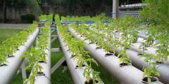 Différents systèmes de la culture hydroponique