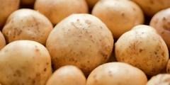 L'importance de la culture de la pomme de terre dans le monde