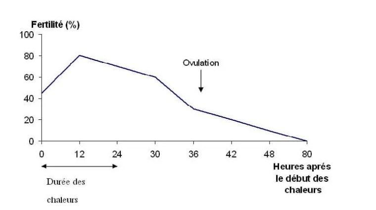 Figure 15: Relation entre le moment de l'insémination et la fertilité chez la vache. (Bonnes et al, 1988)