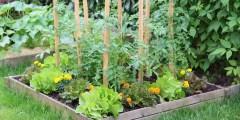 Effet du stress thermique sur les végétaux