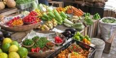 Recherche de nouvelles potentialités de bactéries du genre Bacillus pour l'agriculture et l'agroalimentaire