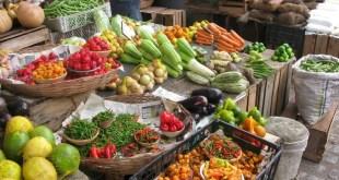 bactéries du genre Bacillus pour l'agriculture et l'agroalimentaire