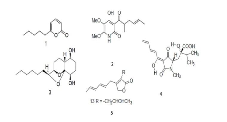 Figure 3: Quelques molécules bioactives en antibiose sécrété par Trichoderma harzianum ; 1 : 6PP ;2 : Harzianopyridone ; 3 : Koninginins A ; 4 : acide Harziamique ; 5 : Hazrianolide.