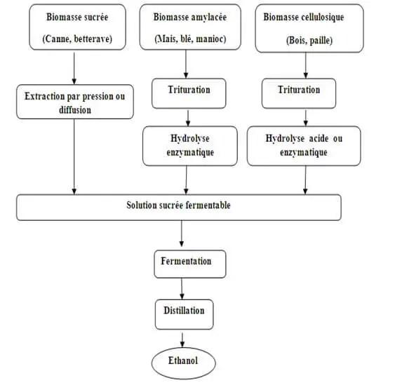 Figure 3 : Schéma explicatif de production du Bioéthanol à partir de plusieurs sources de sucres.