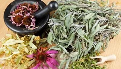 Généralités sur les plantes médicinales