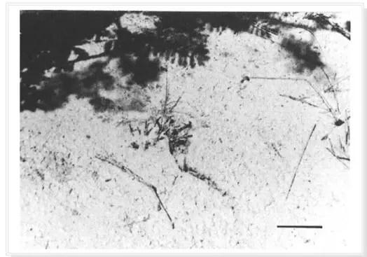 Fig.1 : Localisation des terfez (sol craquelé) (Taylor et al., 1995)