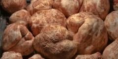 Ecologie des truffes