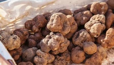 Composés volatils des truffes
