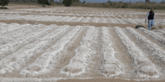 La salinisation des sols en Algérie