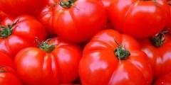 Importance économique de la tomate