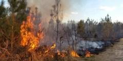 Impact des incendies sur les sols sous subéraies